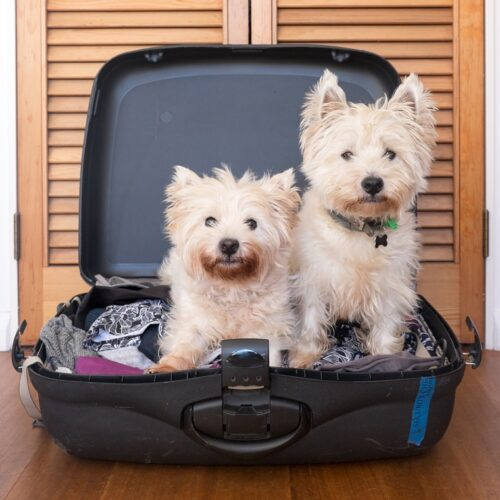 hotel-perros-paguera